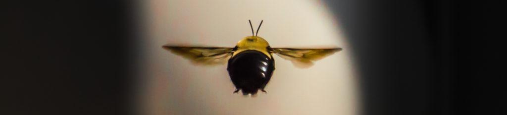amagansett bee